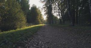 Pov går skottet i löst parkerar i september på solnedgången Royaltyfria Bilder