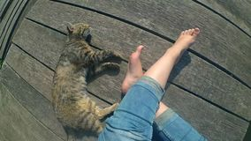 Girl`s legs and lying cat on the surface of old wooden planks. Top view. stock video