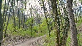 Pov-Kamera geht entlang einen Waldweg Die getrockneten Blätter von letztes Jahr Neuer Frühling grünt, Unterholz, Strauch, Parklan stock footage