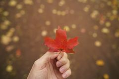 POV man hand hold red maple leaf while walking in alley Royalty Free Stock Photos