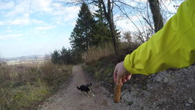 POV of man playing fetch with a dog stock footage