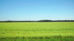 POV: Moving along a green agricultural field and trees on the background in Altai, Russia. POV: Moving along a green agricultural field and trees on background stock footage
