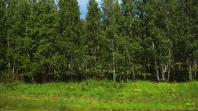 POV: Moving along a wild fields and green forest in Altai, Russia. POV: Moving along a wild fields and green forest in Altai Russia stock video