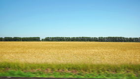 POV: Moving along a yellow agricultural field and row of trees on background in Altai, Russia stock footage