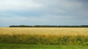 POV: Moving along a yellow agricultural fields at cloudy weather in Altai, Russia. POV: Moving along yellow agricultural fields at cloudy weather in Altai stock video footage