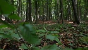 POV na natureza que anda em um trajeto da montanha na floresta vídeos de arquivo