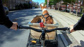 POV owner ride dog or puppy in bike basket