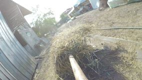 POV point of view of farmer taking hay dry grass with pitchfork in a barn - stock footage