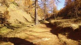 POV que anda no trajeto das madeiras da queda perto das árvores Dia ensolarado do outono que caminha na montanha selvagem da natu filme