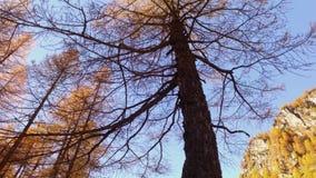 POV que camina en la trayectoria de maderas de la caída órbita alrededor de árboles Día soleado del otoño que camina en montaña s almacen de metraje de vídeo