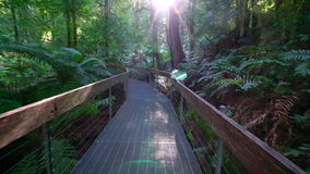POV shot of walking through a rainforest walkway stock footage