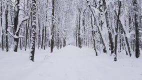 POV som går i skogen vid banan stock video