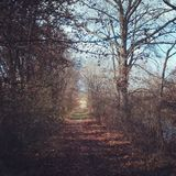 POV. Trail leading into a large field with grass Royalty Free Stock Photography