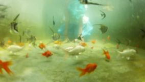 POV - Underwater gold fish with young girl siting on underwater, Underwater Colorful Tropical Fishes. stock video