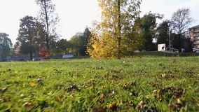 POV walking on lawn in urban city park on a autumn sunny day. Point of view forward fall gimbal shot. POV walking on lawn in urban city park on a autumn sunny stock video