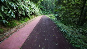 POV of Walking on Road in Tropical Forest stock video footage