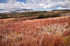 Pover landschap in het Nationale Park Tongariro Stock Foto