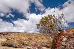 Pover landschap in het Nationale Park Tongariro Royalty-vrije Stock Foto's