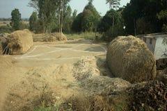 Povera azienda agricola indiana della famiglia Andhra Pradesh, Anantapur Immagini Stock Libere da Diritti