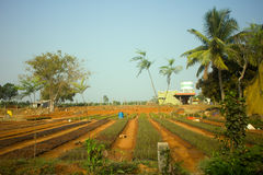 Povera azienda agricola indiana della famiglia Andhra Pradesh, Anantapur Fotografia Stock Libera da Diritti