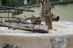 Povere scimmie in uno zoo Immagine Stock Libera da Diritti