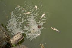 Poveri pesci Fotografia Stock Libera da Diritti