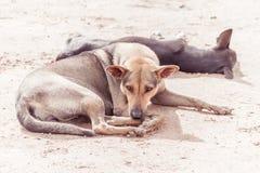 Povero anziano di tristezza e cane malato della via - di razza Fotografia Stock