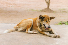 Povero anziano e cane malato della via - di razza Fotografia Stock Libera da Diritti