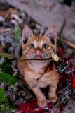 Povero gatto fotografie stock libere da diritti