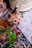 Povero gatto Immagini Stock