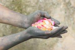 Povos de jardinagem das mãos escuras com rosas Fotos de Stock