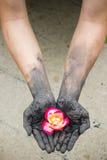 Povos de jardinagem das mãos escuras com rosas Imagens de Stock Royalty Free