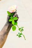 Povos de jardinagem das mãos escuras com rosas Fotografia de Stock