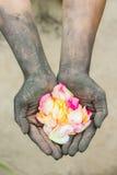 Povos de jardinagem das mãos escuras com rosas Fotos de Stock Royalty Free