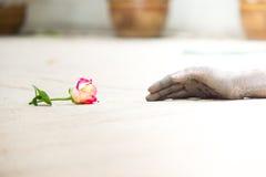 Povos de jardinagem das mãos escuras com rosas Imagens de Stock