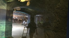 povos de 4K Ásia que olham os peixes que nadam no fron pequeno Taiwan do aquário da video estoque
