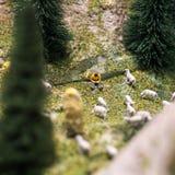 Povos diminutos: pastor novo que lê um livro e os carneiros que andam em torno dele na grama verde do gramado Foto macro, rasa Foto de Stock