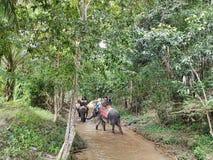 Povos do transporte dos elefantes fotos de stock royalty free