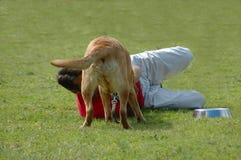 Povos e cães Imagens de Stock Royalty Free