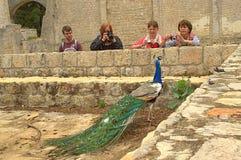 Povos e pavão em ruínas antigas do monastério Foto de Stock Royalty Free