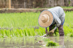 Povos na exploração agrícola Foto de Stock Royalty Free