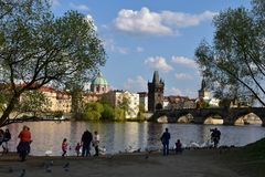 Povos que alimentam as cisnes no banco de rio de Vltava Fotos de Stock Royalty Free