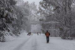 Povos que andam e que tobogganning acima da estrada coberto de neve em Moun Fotografia de Stock