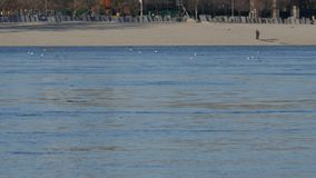 Povos que andam em uma praia situada no outro lado do rio Danúbio vídeos de arquivo