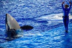 Povos que esperam o começo de uma mostra do oceano com as baleias de assassino bonitas em Seaworld 2 imagens de stock