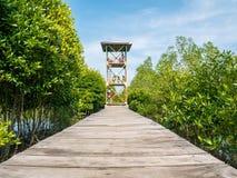 Povos que estão na torre que olha manguezais de cima nos manguezais Forest Conservation fotos de stock