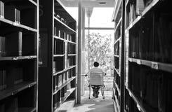 Povos que estudam na biblioteca Fotos de Stock