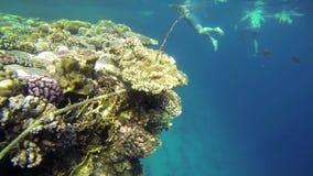 Povos que nadam sobre os corais enormes no mar azul video estoque