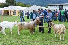 Povos que olham e que discutem no mercado das cabras de Stans Imagem de Stock