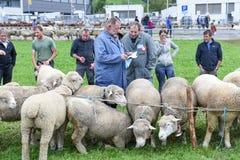 Povos que olham e que discutem no mercado dos carneiros de Stans Imagens de Stock Royalty Free